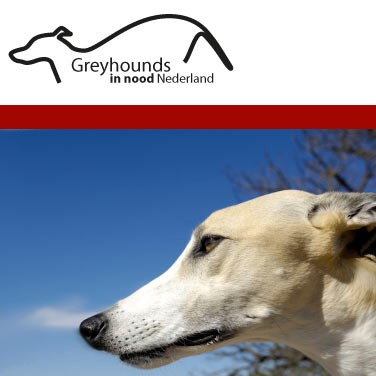 Greyhounds in Nood