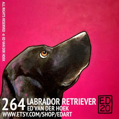 264 Labrador Retriever